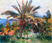 Palm Tree Bordighera c1884 By Claude Monet