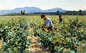 In The Vineyard By Elin Kleopatra Danielson Gambogi