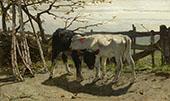 The Calves 1863 By Willem Maris