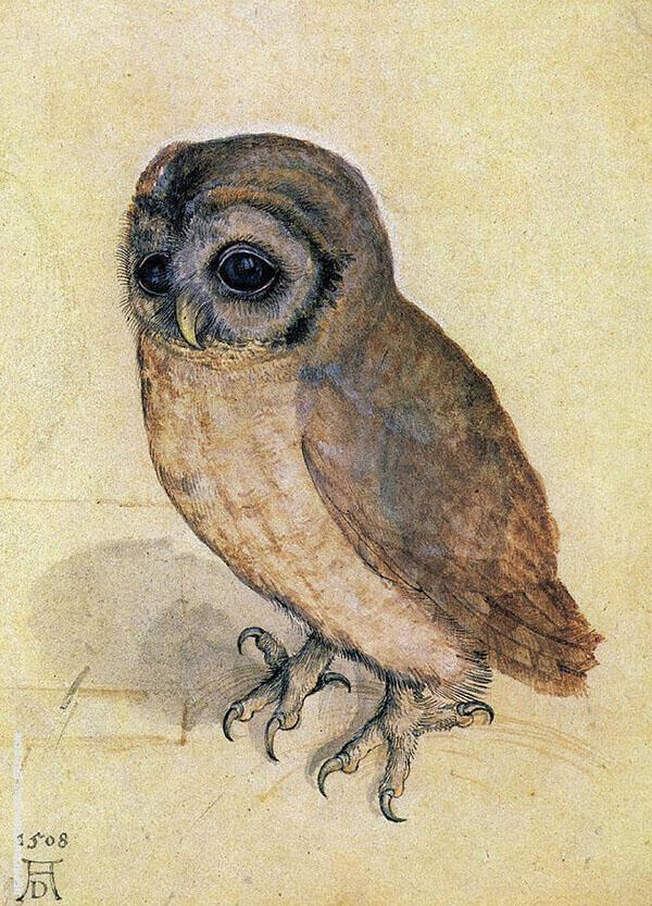 Tawny owl 1508 By Albrecht Durer