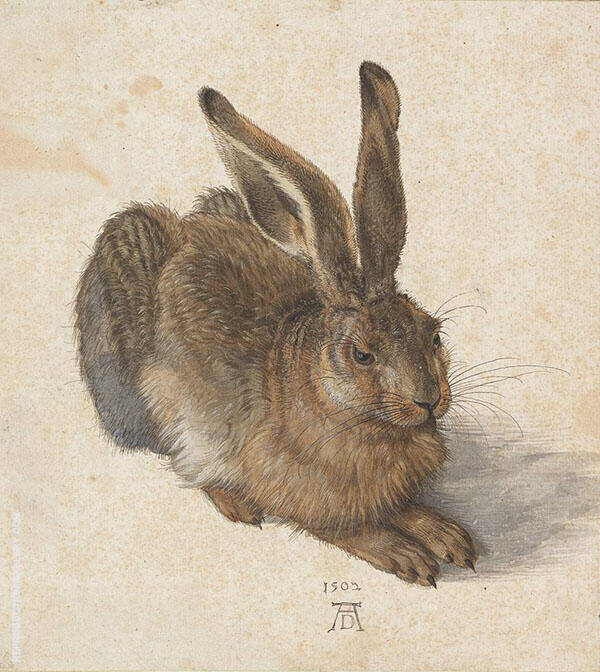 Young Hare 1502 By Albrecht Durer