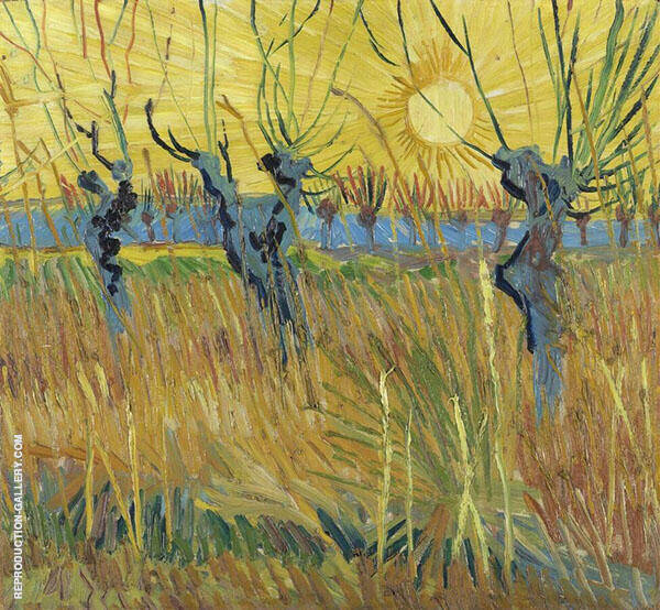 Pollard Willows at Sunset 1888 Painting By Vincent van Gogh