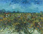 The Green Vineyard 1888 By Vincent van Gogh