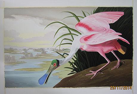 Roseate Spoonbill 1935 - <a href='https://www.reproduction-gallery.com/artist/john-james-audubon/'>More Detail</a>